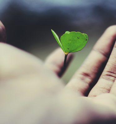 Educators: The Ultimate Testimony to Growth Mindset